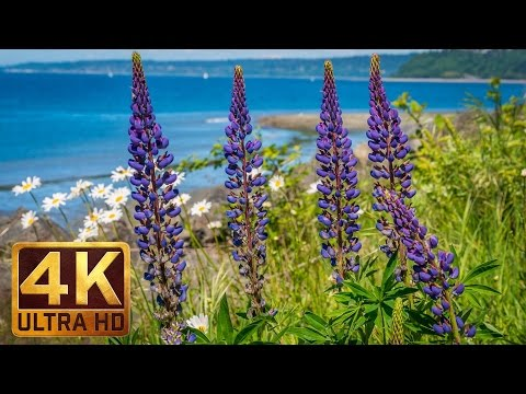 4K Relaxation Video - Discovery Park in Seattle - Part 3 (1.5 hours)