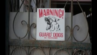 بالفيديو- 9 كلاب تثير ذعر سكان