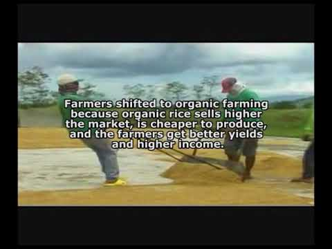 organic rice cooperative  farming business The PECUARIA Experience