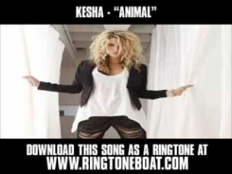 KeSha   'Animal'  New Music Video + Lyrics + Download