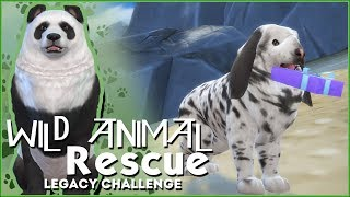 One Lucky Rabbit!! 🌿Sims 4 Wild Animal Rescue Challenge #3