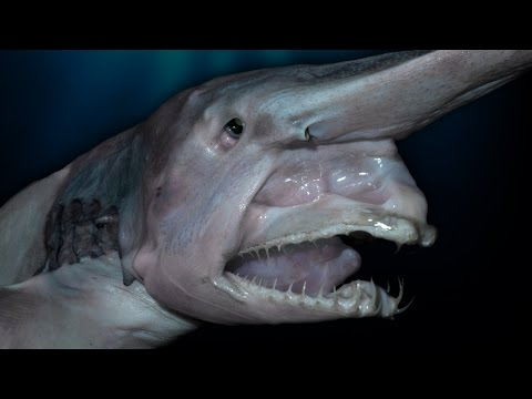 Top 10 Creepy Deep Sea Creatures Discovered