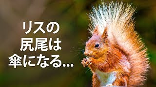 思わず人に教えたくなる動物トリビア50選。動物園に行って友達や恋人、お子さんに自慢してみては?