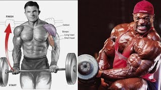 8 BEST BICEPS WORKOUT SIENCE- BASED: TOP EXERCICES BICEPS SELON LA SCIENCE