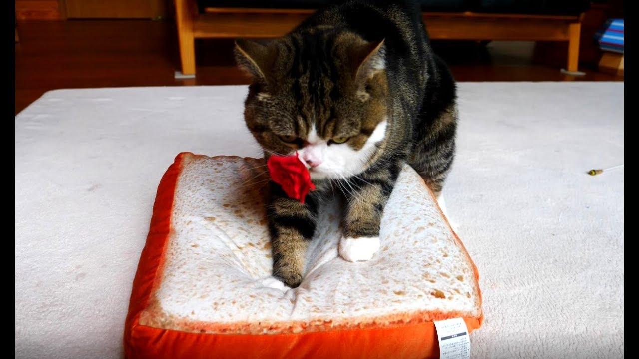 食パンをこねるねこ-maru-kneads-white-bread