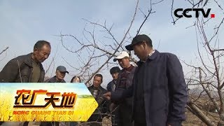 《农广天地》 20190528 手把手教你熬制石硫合剂| CCTV农业