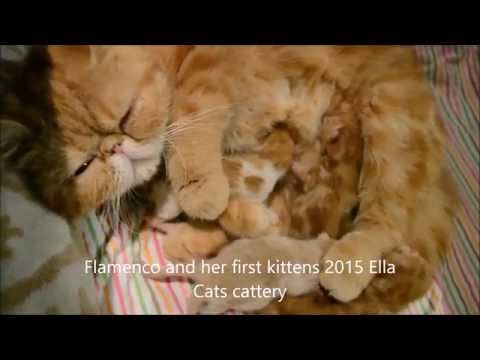 2 days old kittens with mom cat