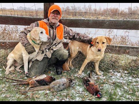 December Pheasant Hunting In South Dakota