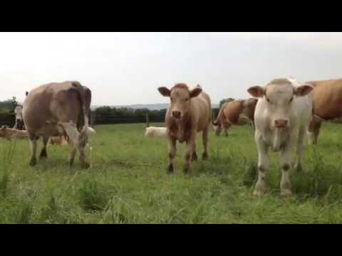 The Terrifying Stampede Of Cattle Youtube