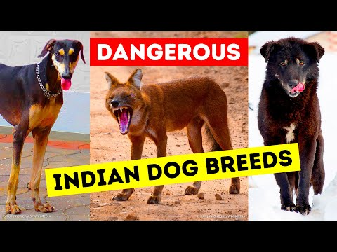 9 Dangerous Dog Breeds That People Still Keep as Pets
