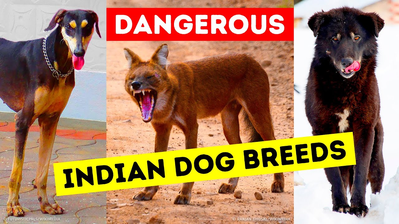 9 Dangerous Dog Breeds That Indians Still Keep as Pets