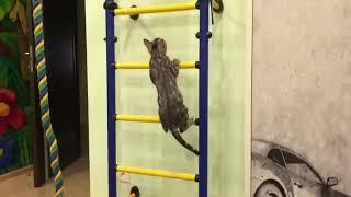 LEOMINIPARD Питомник бенгальских кошек, редких окрасов💕