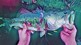 Zombie Bass Caught in Florida⚠️BEWARE ⚠️