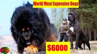 Top 10 Most Expensive Dogs In The World(world info)