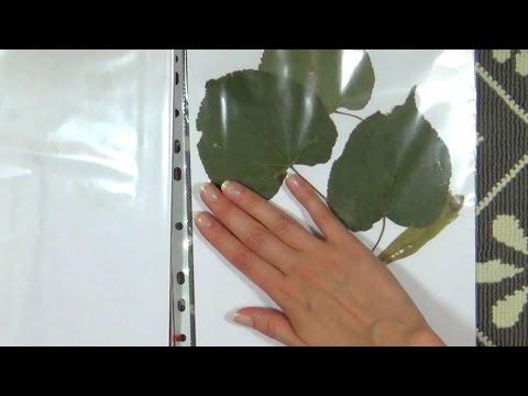 asmr---sticky-finger,-sticky-hands-some-soft-speaking-in-polish