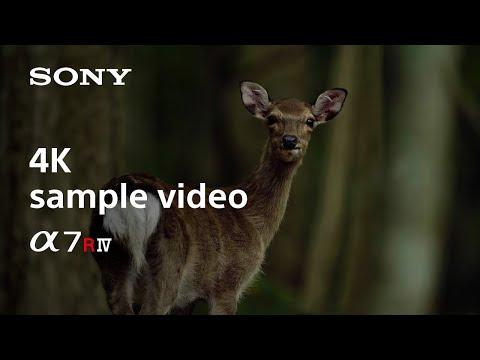 ソニー、α7R IV フルサイズミラーレスカメラ7月23日予約開始!6100万画素!2019年9月6日発売/価格は3500ドル。SONYカメラ新モデル予約情報 2019