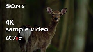 Sony Alpha 7R Mark IV Body Video