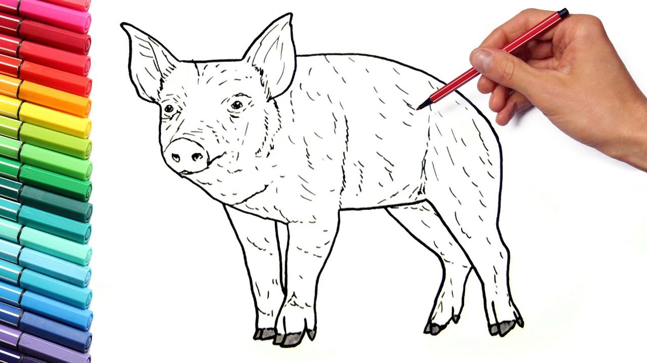 Farm animals Coloring Pages for Kids - Draw a Pig - Learning Animals ...