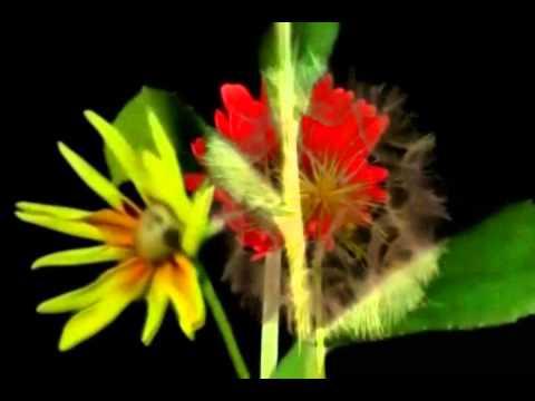 Flores En Movimiento Youtube