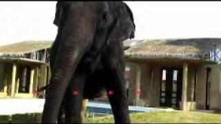 O Passo do Elefantinho