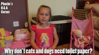 Why do cats & dogs not use toilet paper? - Phoebes Corner