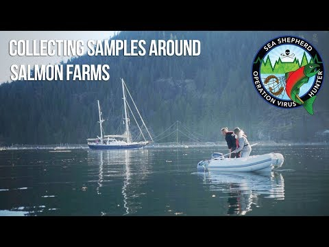 Collecting Samples Around Salmon Farms