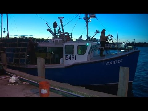 Boats Race For Prime Spots To Set Lobster Traps On First Day Of Season In Parts Of Nova Scotia