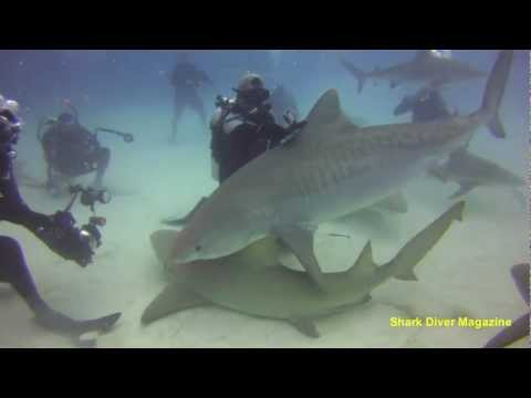 How I made my GoPro Shark Critter Cam - SDM Journal # 46