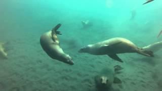 Anacapa Island, Ca -- Sea Lion Beach, Spectre Dive Boat 10-27-12