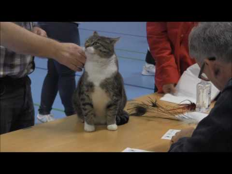 Bastian at the Cat Show