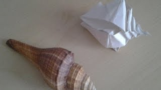 Origami Conchiglia Shell Conquille ... (gatto999.it)