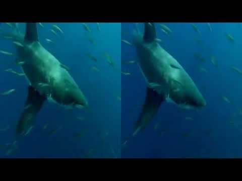 LG 3 Boyutlu Sualtı balıklar kısa film