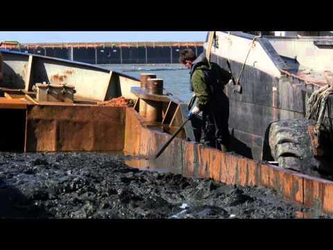 Wadden Sea silt for sandy soil improvement