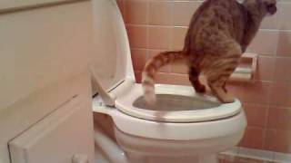 cat pooping in toilet