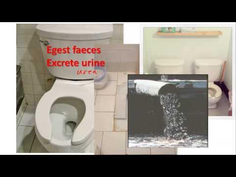 How Sewage Kills Fish For IGCSE Biology