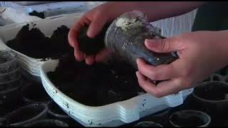 élevage escargot Maroc