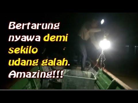 Membelat udang galah di sungai bernam | Amazing | Part1
