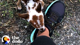 Tiniest Baby Deer Asks Woman To Rescue Him | The Dodo Faith = Restored