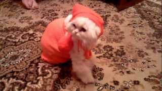 Прикольный кот в деткой одежде
