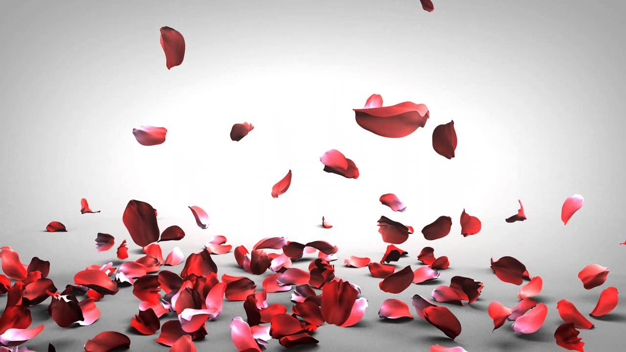 Fall Ceiling Wallpaper Design Falling Rose Petals Youtube