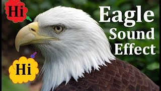 Eagle Sound Effect Screech Scream Soaring in Sky Bird Flying Effects Bald American Majestic