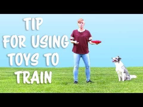 Tip for Using Toys to Train Your Dog -  Dog Training