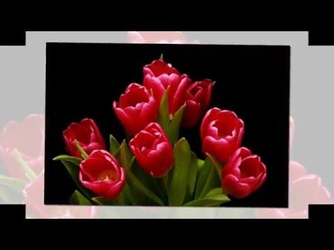 Весна   нежные тюльпаны