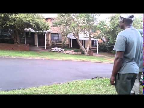 Ezemvelo KZN Wildlife attempt to catch a baby zebra in Mtunzini