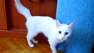 Кошка сходит с ума! Cat goes crazy!