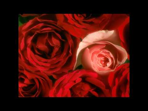 Florin Bogardo - Sa nu uitam nicicand sa iubim trandafirii.wmv