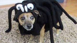 SPIDER DOG - BFVSGF