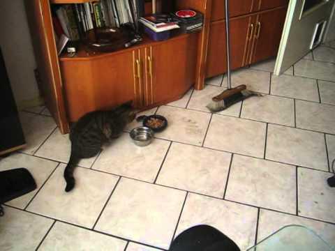 maus jagt die katze weg weil sie mit ruhe fressen will youtube. Black Bedroom Furniture Sets. Home Design Ideas