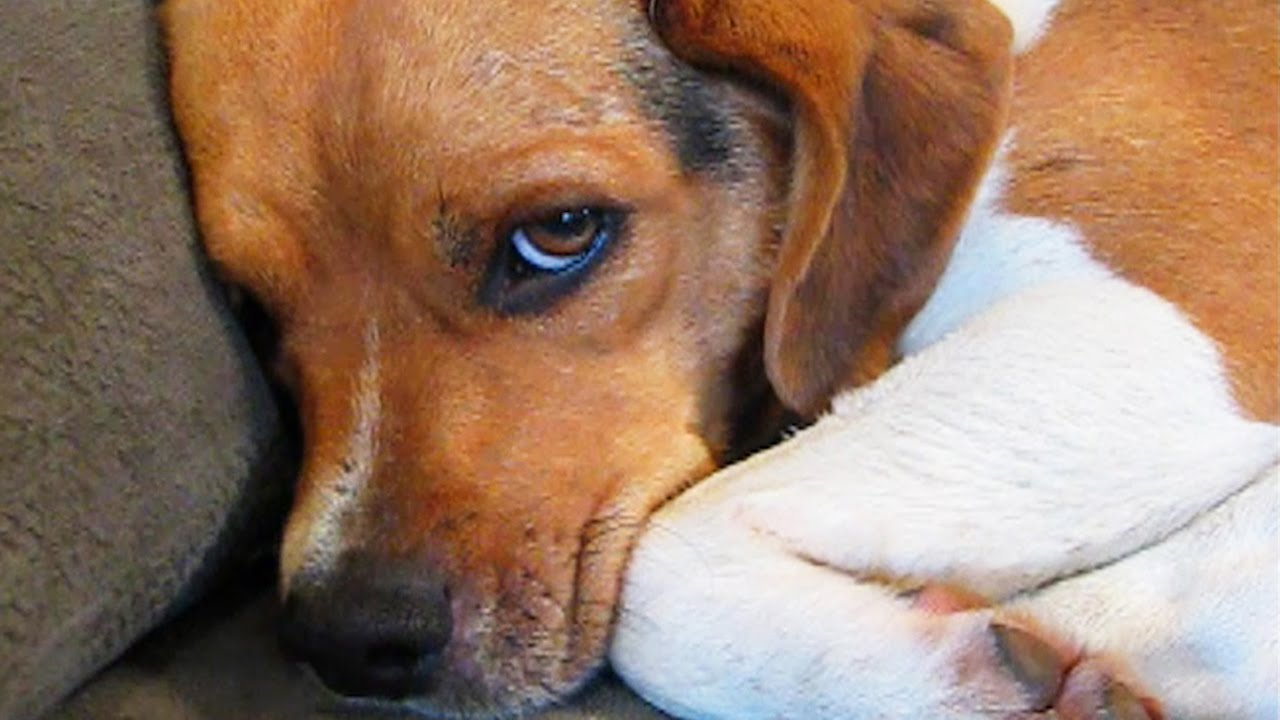 11 Guilty Dogs Who Are Very Sorry