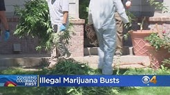 Marijuana Busts: Largest Law Enforcement Marijuana Operation In Colorado History